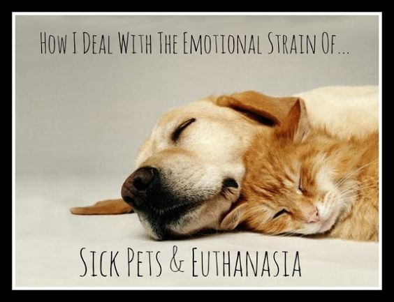 The Emotional Strain of Sick Pets & Euthanasia