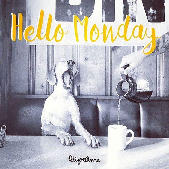 ¡Buenos días! ¿Cómo lleváis el lunes?  // Good morning! How's your Monday going?   @ana_roxana_12
