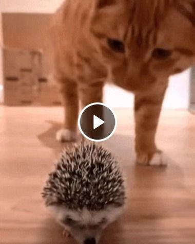 Sai daí gatinho, isso não é uma bola de lã. Procura outro brinquedo!