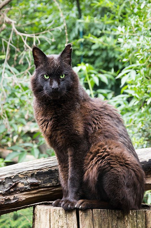 Jungle Cat In 2020 Black Cat Day National Black Cat Day Kittens And Puppies