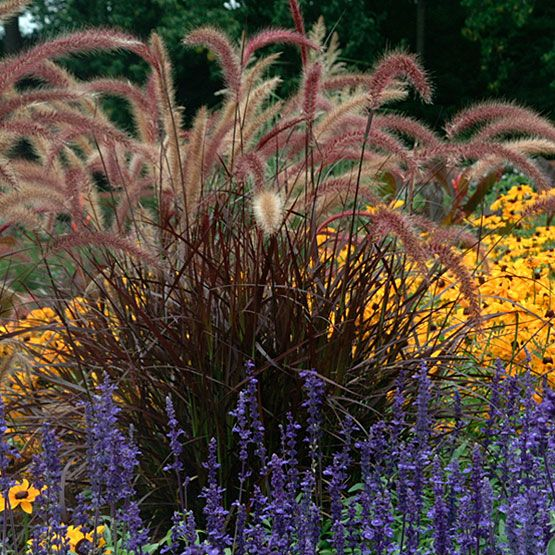 Fountain Grass. I am in love with my fountain grass this year. I have mine in a large planter and it's just relaxing to watch in the wind.