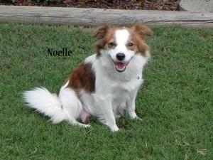 #20 Noelle is a Papill...