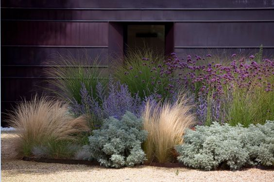 Northern California drought-tolerant garden ~ grasses, artemisia, succulents, Russian sage, & verbena bonariensis; contrast of texture & form create a lot of visual interest, heights lead the eye from front to back. . . . . ღTrish W ~ http://www.pinterest.com/trishw/ . . . .: