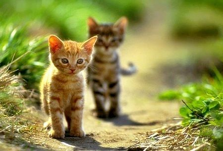 Some people say they hate cats but let's face it, they couldn't come close to saying these kits aren't anything but adorable!