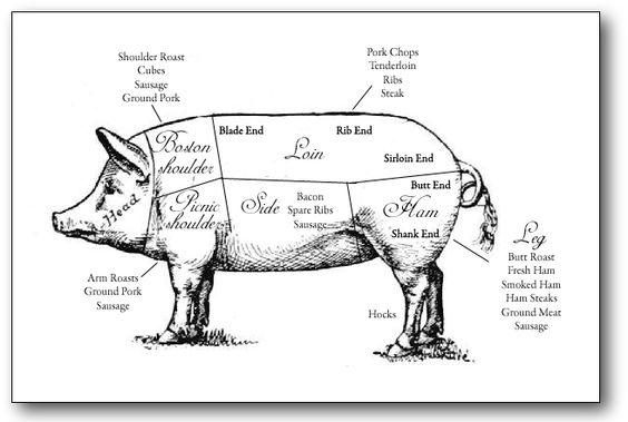 British Uk Cuts Pork 146627471 also Stock Illustration Butcher Cuts Scheme Pork Hand Drawn Illustration Vintage Style Image55714399 in addition Pig Diagram likewise 389497777 Shutterstock Raster Illustration Chicken Rabbit furthermore Pork Pig Cochon Butcher Meat Cut Chart. on hog cuts of meat chart