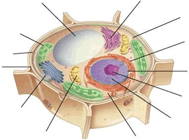 Plant cell, Plants and The o'jays on Pinterest