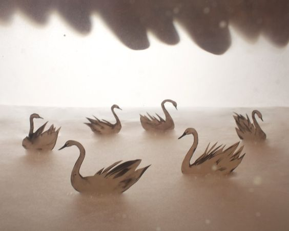 dreamy swans.
