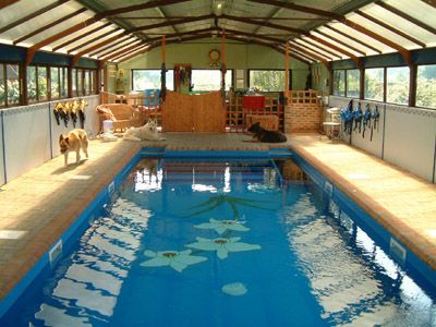 The White Orchid Canine Hydrotherapy In Sussex The Pool Sesion Crh Pinterest White