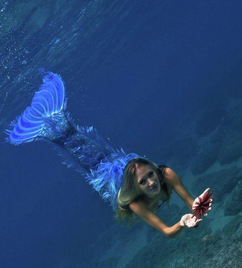 Little Mermaid Erg Mooie 07240