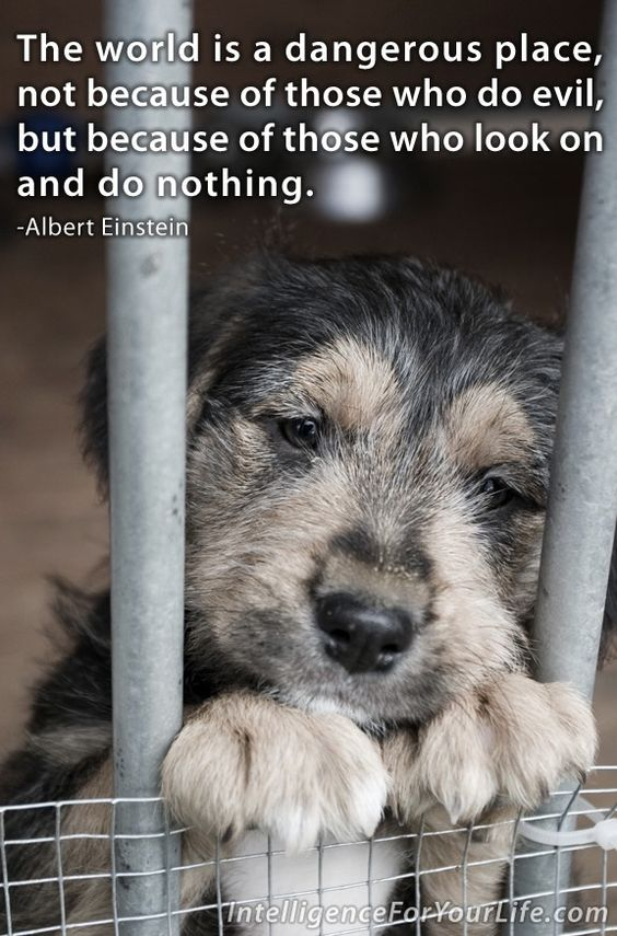 May is animal abuse awareness month. There is nothing more innocent than animals & children. You can rate a person's character on how they treat them.: