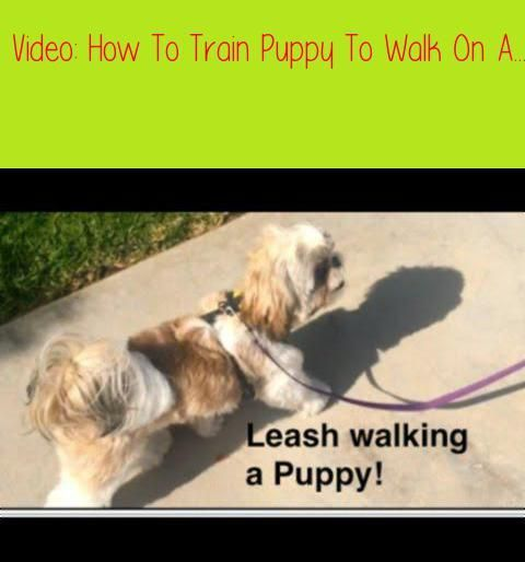 Fearful Dog Training Enrichment For Fearful Dogs Dog Training