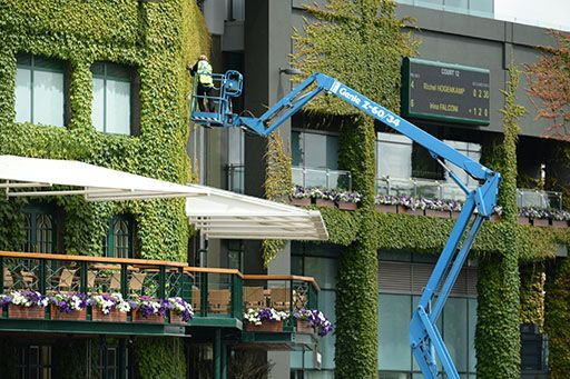 Staff need a crane to tend to the ivy