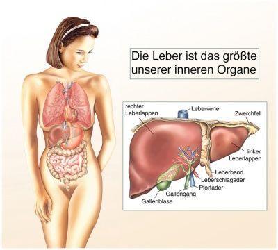 Gewichtsverlust der inneren Organe des Körpers