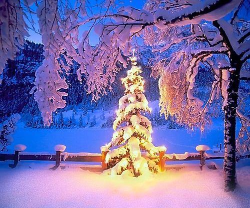 Christmas, The Cascades, Oregon.