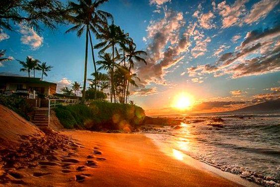ハワイの夕日とヤシの木