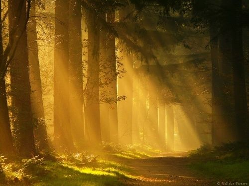 Sun Ray Forest, The Netherlands
