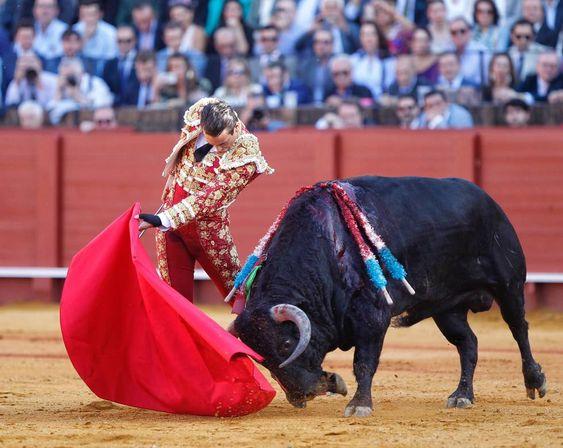 El toro 'Encendido', de Núñez del Cuvillo, en la muleta de José María Manzanares.