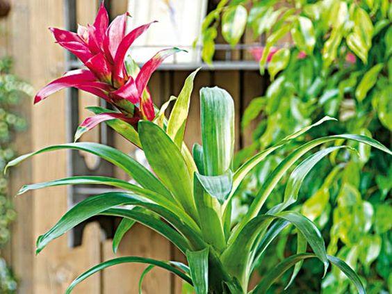 Des plantes d 39 int rieur exotiques interieur et articles for Plantes tropicales d interieur