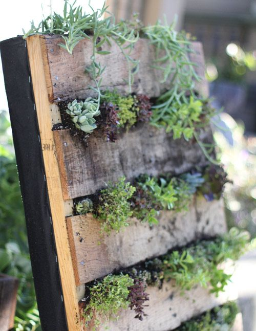 Vertical garden with a recycled pallet