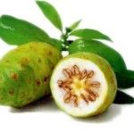 Noni emagrece devidos suas características e relatos de usuários, a fruta é denominada por usuários como milagrosa. Mas veja o que falam de Noni.