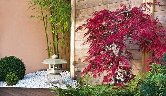 Planter une haie bambou : http://www.travauxbricolage.fr/travaux-exterieurs/jardin-paysagisme/prix-haie-bambous/