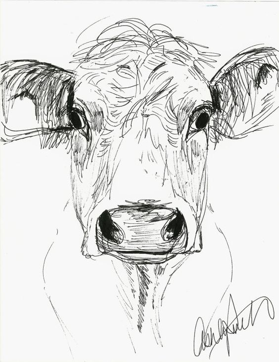 Beef Cattle Drawing