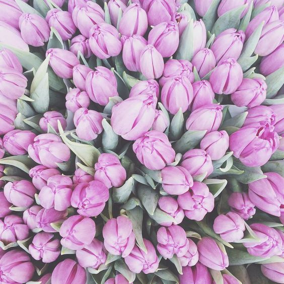 Stunning tulips I photographed at Columbia Road Flower Market. The best place to buy flowers!