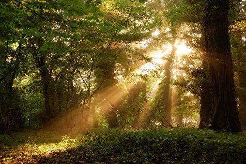 dia de proteção às florestas   Blog do Grupo Caixa Seguros