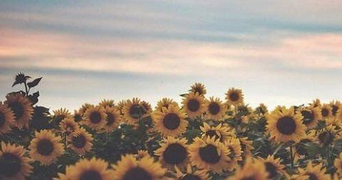 Photo Twitter Cover Photo Facebook Cover Photos Vintage Twitter Header Photos