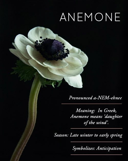 Design Sponge Flower Glossary Anemone Flower Meanings Flower Definitions Anemones Anemone Anemone Flower Flowers