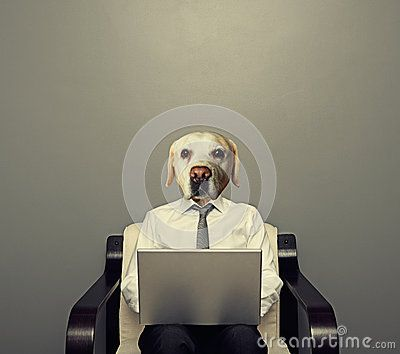 Dog Businessman With Laptop - Download From Over 47 Million High Quality Stock…