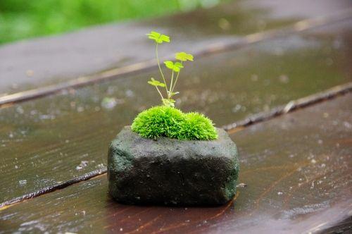石の上の苔
