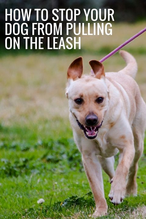How To Stop Your Dog From Pulling On The Leash Dog Training