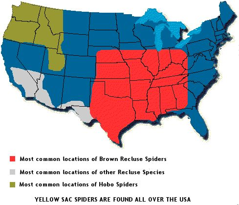 Brown Recluse And Their Desert Subspecies And Hobo Spider Range - Map of poisonous spiders in the us