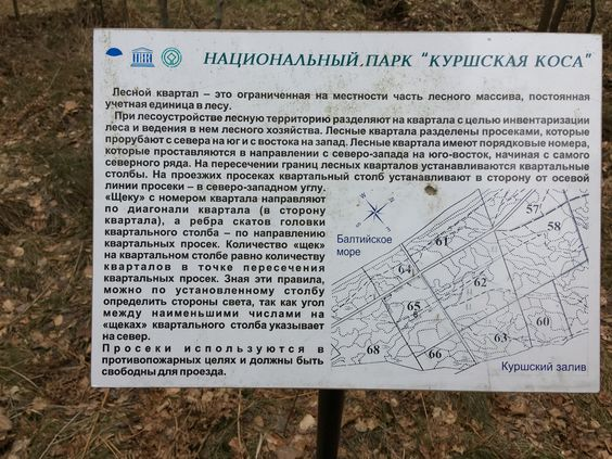 План просек на Курской косе. Фото Vladimir Shveda