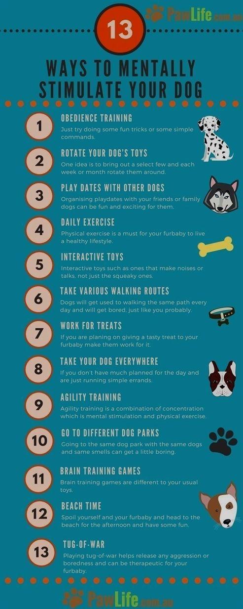 Dog Training And Boarding Dog Training 07060 Dog Training