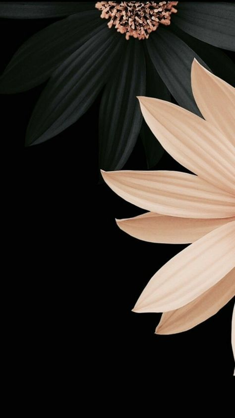 Flower Design Black And White Flowers Black Background Wallpaper Abstract