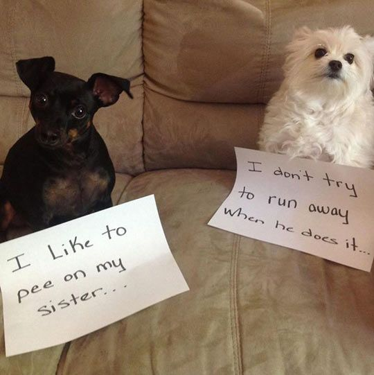 Dogs With Signs Of Shame Shameless Confessions
