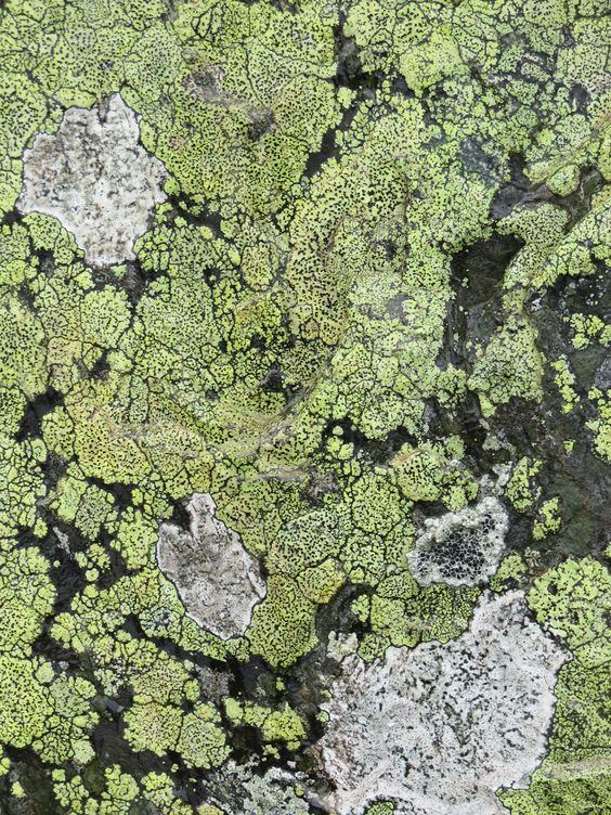 Moss patterns / Wicklow Coast