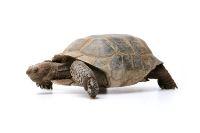 Desert Tortoise Basic Care | Arizona Exotics | -Tortoises & Turtles Resources