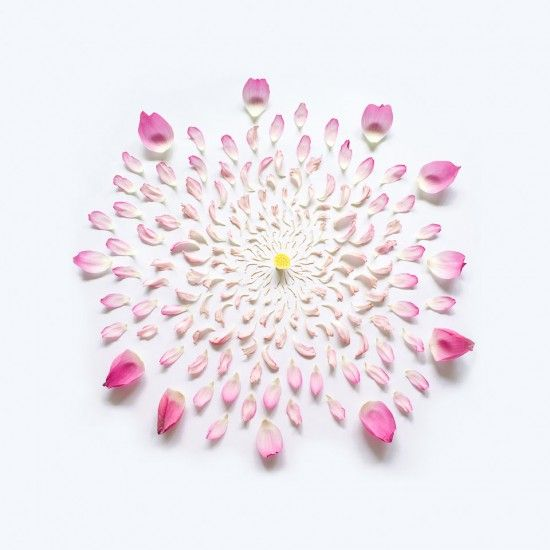 Beautiful dissected flower series of singaporean photographer Fong Qi Wei...this is a lotus