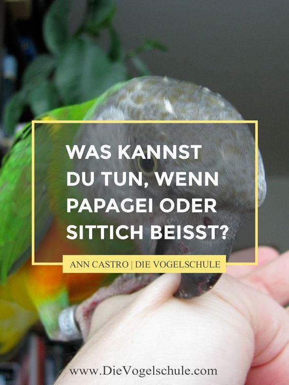 Wenn Papageien oder Sittiche beißen, geht viel Vertrauen kaputt. Was kannst Du tun, um Dir und Deinen Vögeln zu helfen?
