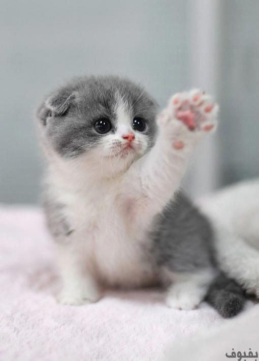 Cute Cats And Kittens Drawings The Cutest Cats And Kittens In The World Cutestcatsandkittensever Cute Baby Cats