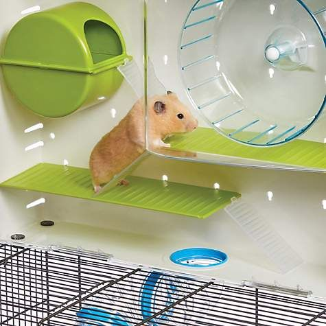 Pin On Hamster Supplies