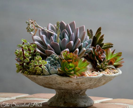 "Succulents are shallow rooting and therefore a container that is 3"" deep, is deep enough! design/photo: The Succulent Perch"