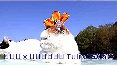 Pin By Angelina Boehm On 11 Flower In 2020 Tulips Cats Animals