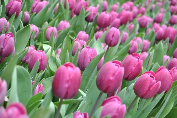Flores y colores!