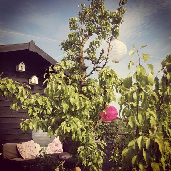 Lampionnen op solar! #myplace #summer