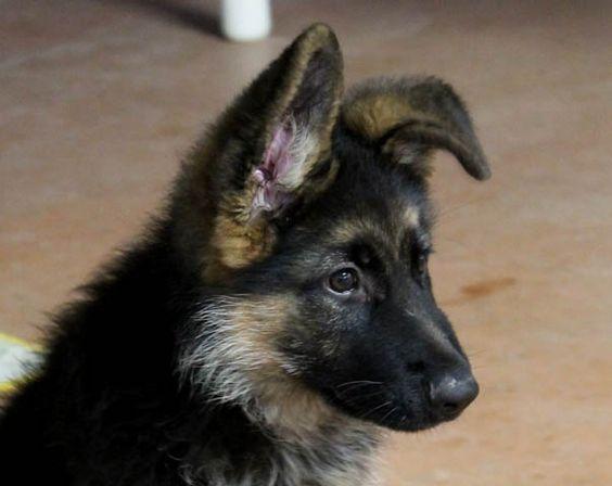 Ciro e' molto interessato! / Ciro is very interested!