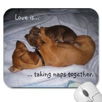 <3 Love is taking naps together <3